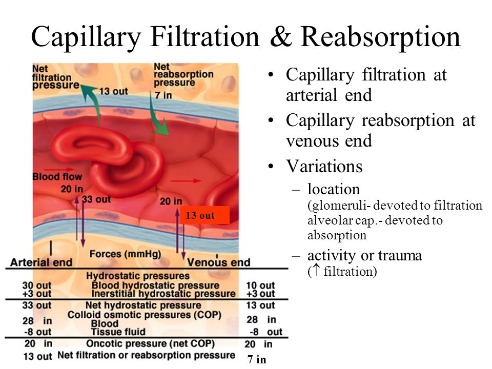 Capillary Filtration & Reabsorption
