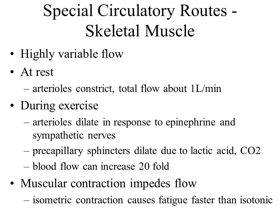 Special Circulatory Routes - Skeletal Muscle