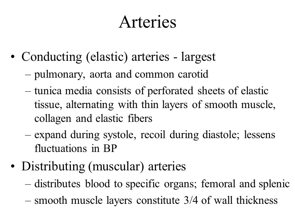 Arteries Conducting (elastic) arteries - largest