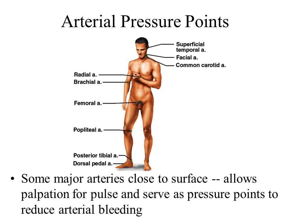 Arterial Pressure Points