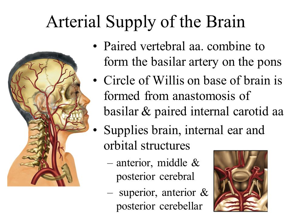 Arterial Supply of the Brain