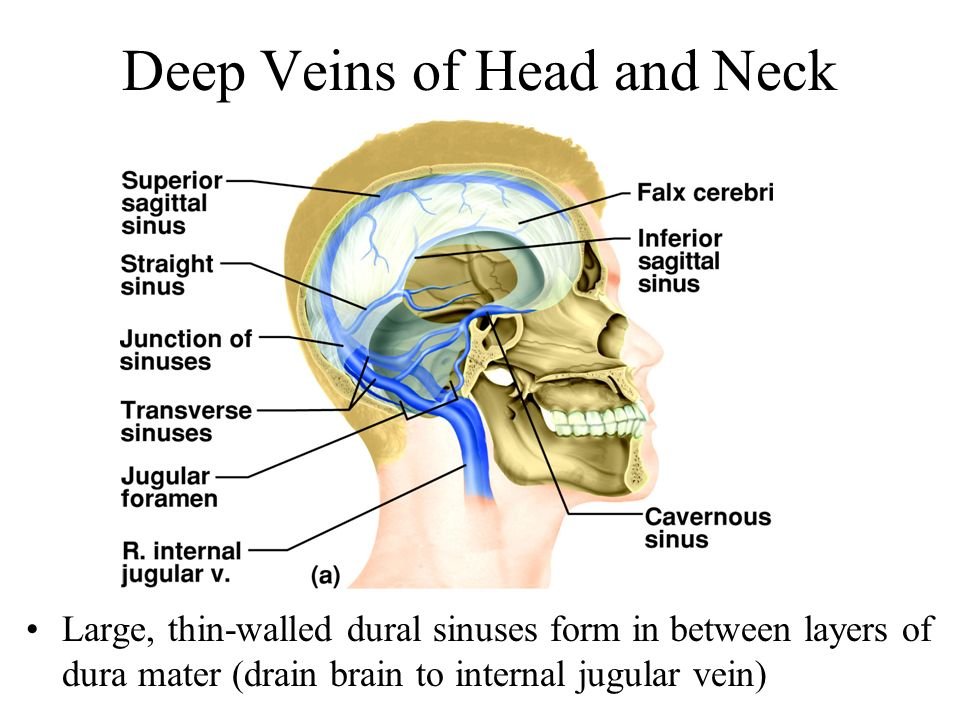 Deep Veins of Head and Neck