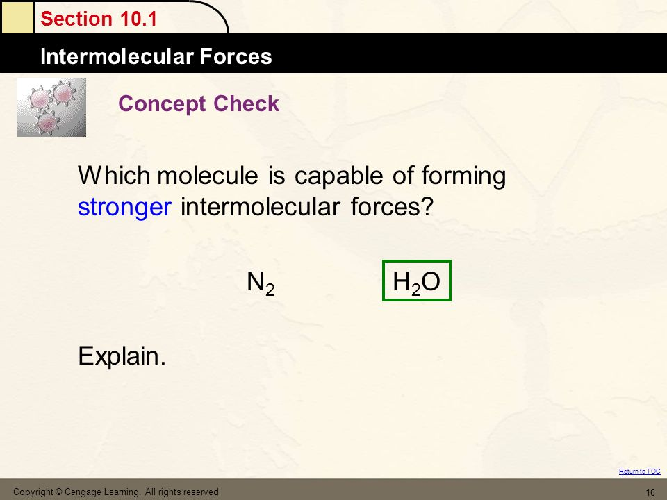 Which molecule is capable of forming stronger intermolecular forces