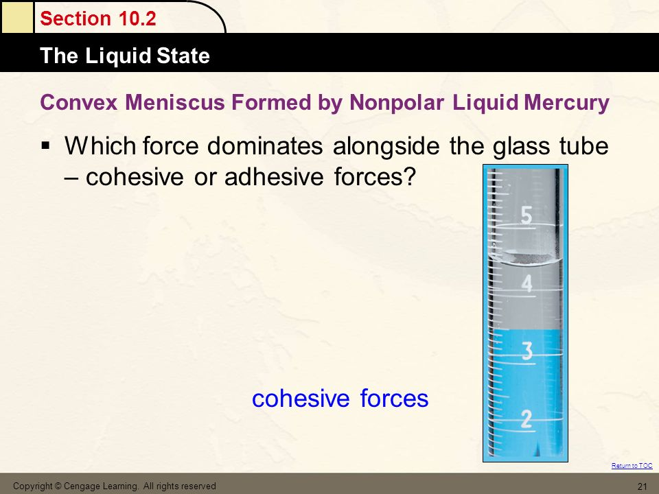 Convex Meniscus Formed by Nonpolar Liquid Mercury