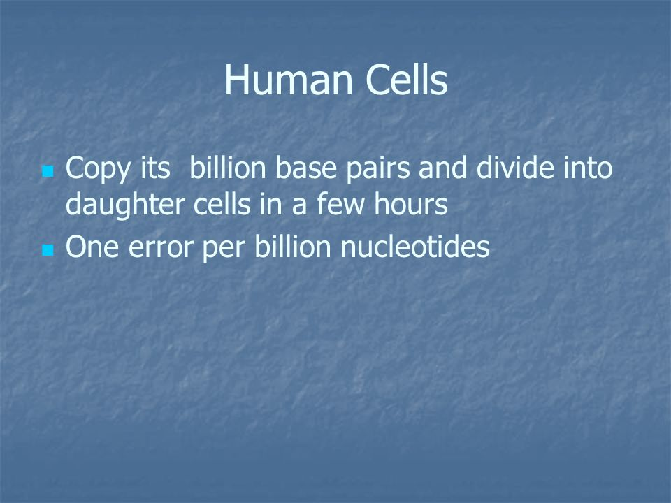 Human Cells Copy its billion base pairs and divide into daughter cells in a few hours.