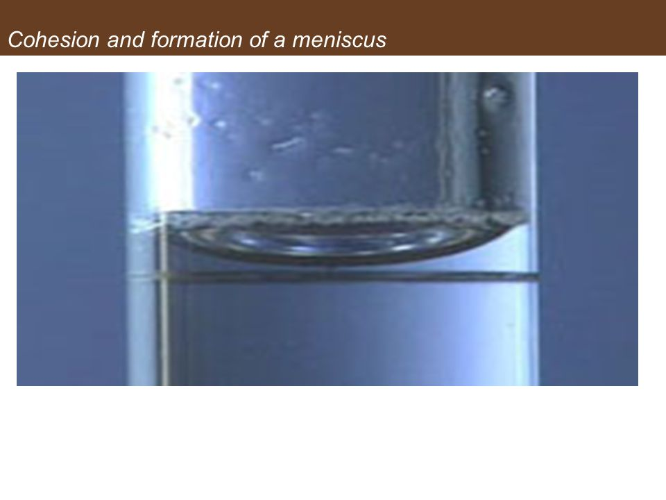 Cohesion and formation of a meniscus