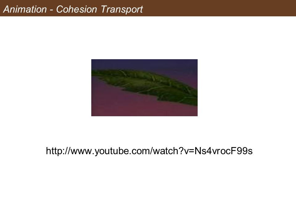Animation - Cohesion Transport