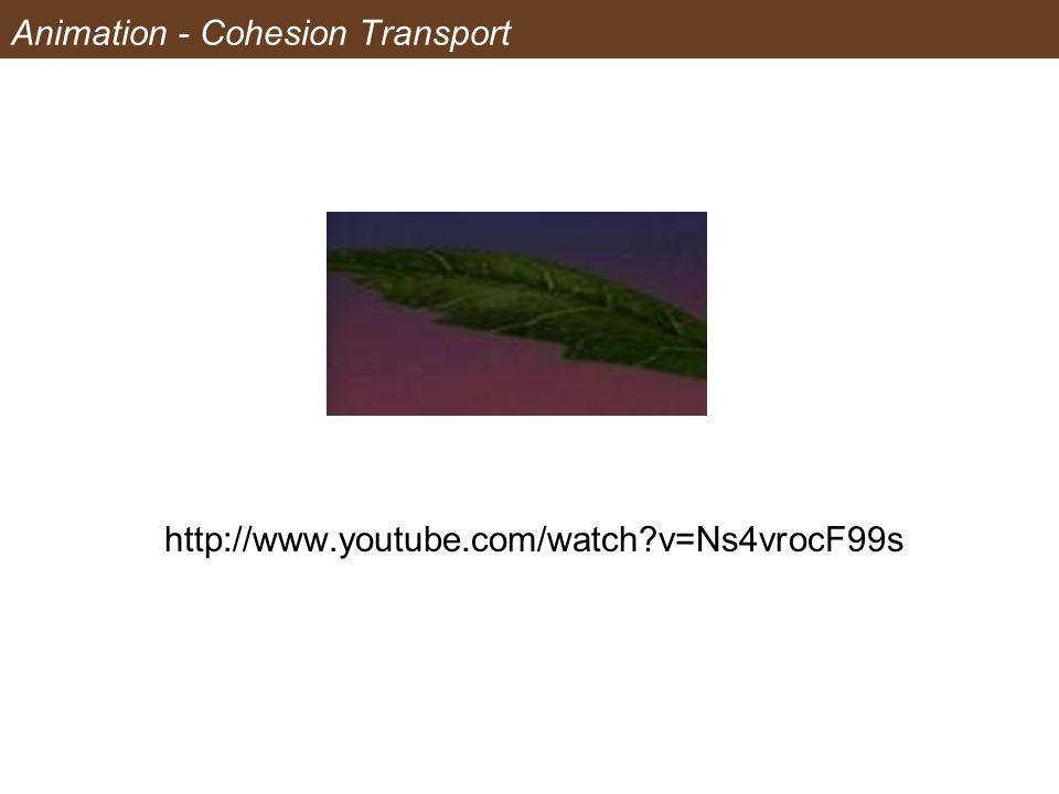 Animation - Cohesion Transport