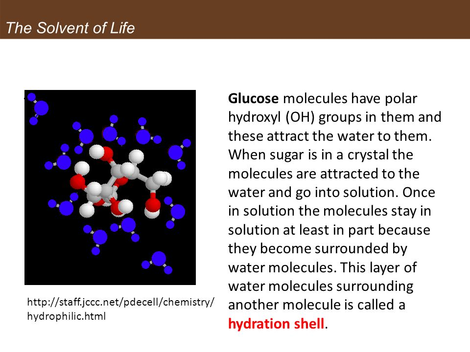 Glucose molecules have polar hydroxyl (OH) groups in them and these attract the water to them. When sugar is in a crystal the molecules are attracted to the water and go into solution. Once in solution the molecules stay in solution at least in part because they become surrounded by water molecules. This layer of water molecules surrounding another molecule is called a hydration shell.