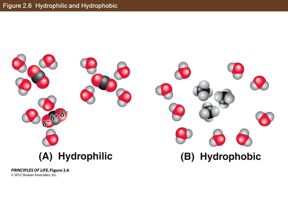 Figure 2.6 Hydrophilic and Hydrophobic