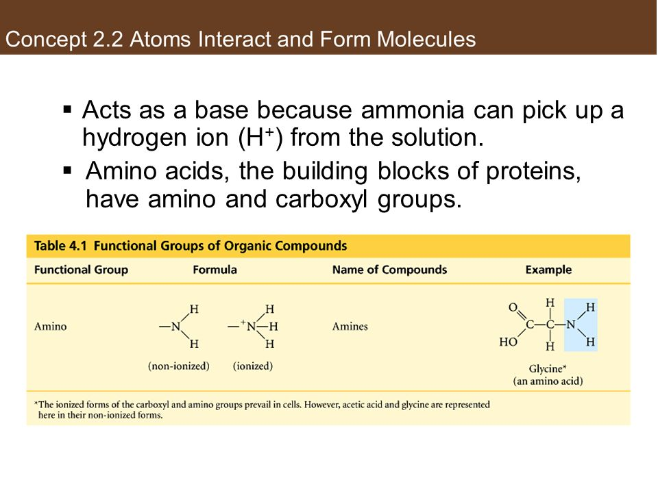 Amino group Acts as a base because ammonia can pick up a hydrogen ion (H+) from the solution.