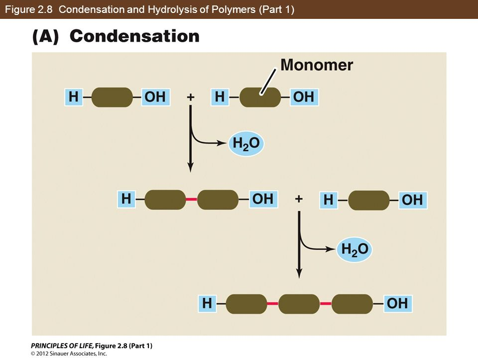 Figure 2.8 Condensation and Hydrolysis of Polymers (Part 1)