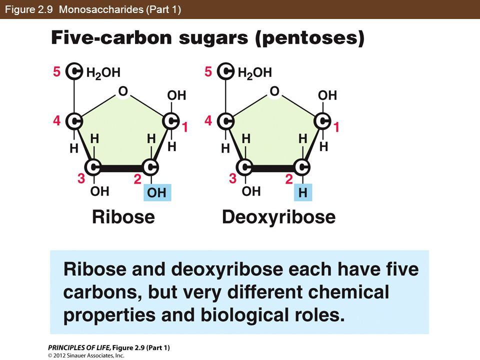 Figure 2.9 Monosaccharides (Part 1)
