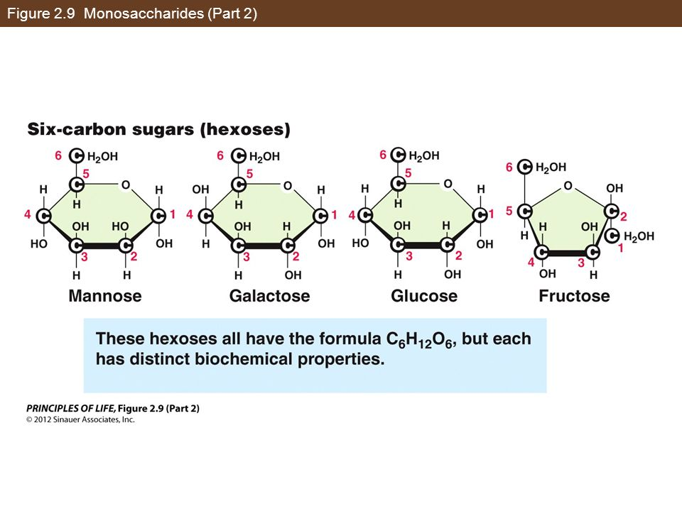 Figure 2.9 Monosaccharides (Part 2)