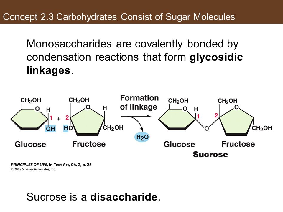 Concept 2.3 Carbohydrates Consist of Sugar Molecules
