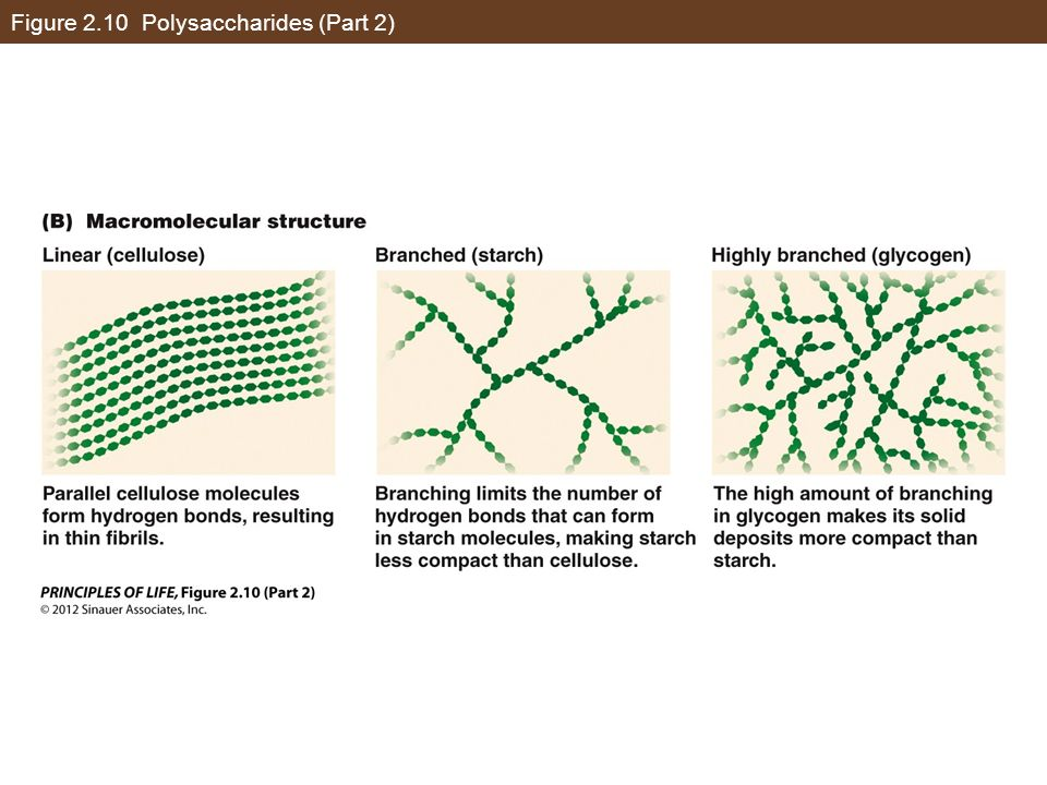 Figure 2.10 Polysaccharides (Part 2)