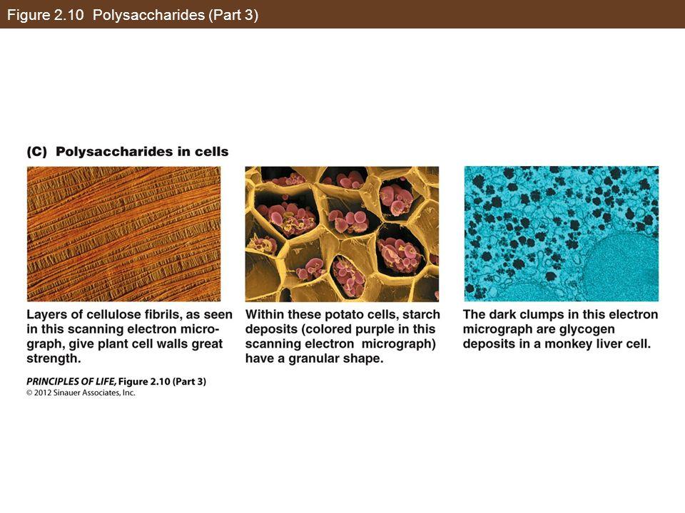 Figure 2.10 Polysaccharides (Part 3)