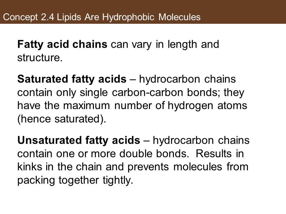 Concept 2.4 Lipids Are Hydrophobic Molecules