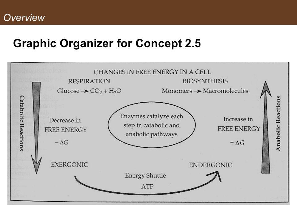 Graphic Organizer for Concept 2.5