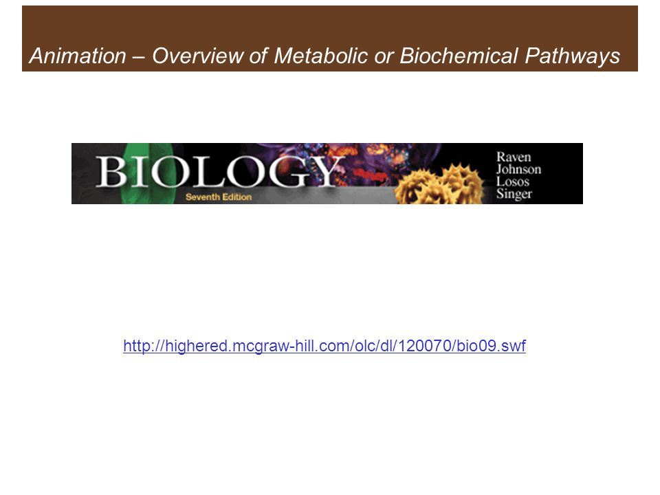 Animation – Overview of Metabolic or Biochemical Pathways
