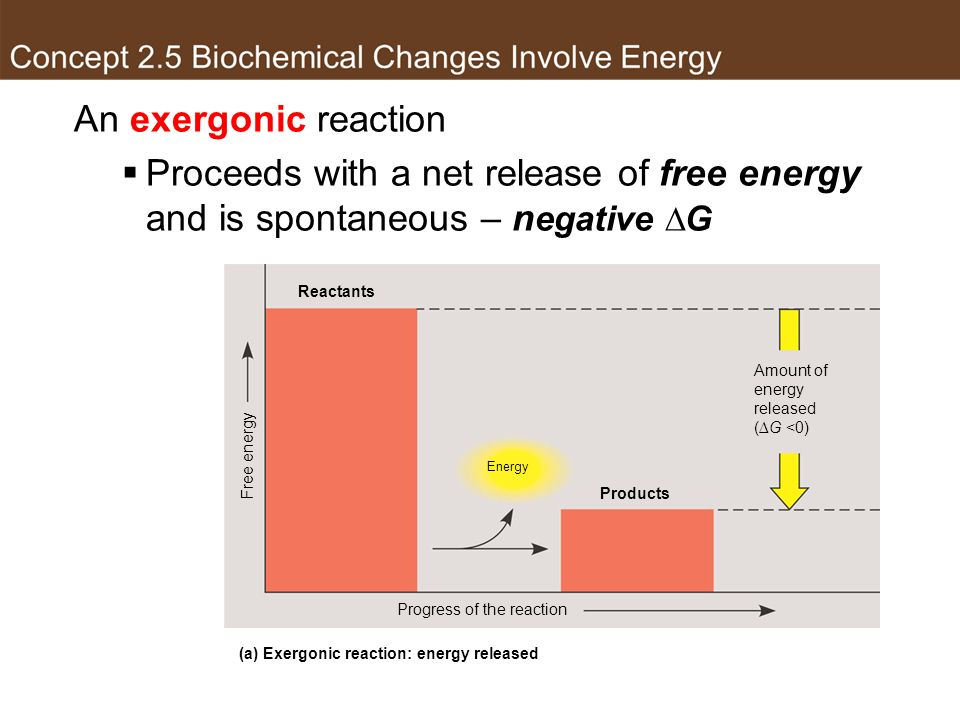 (a) Exergonic reaction: energy released
