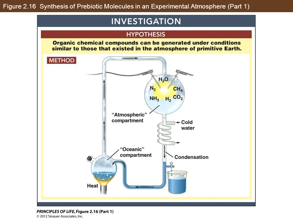 Figure 2.16 Synthesis of Prebiotic Molecules in an Experimental Atmosphere (Part 1)