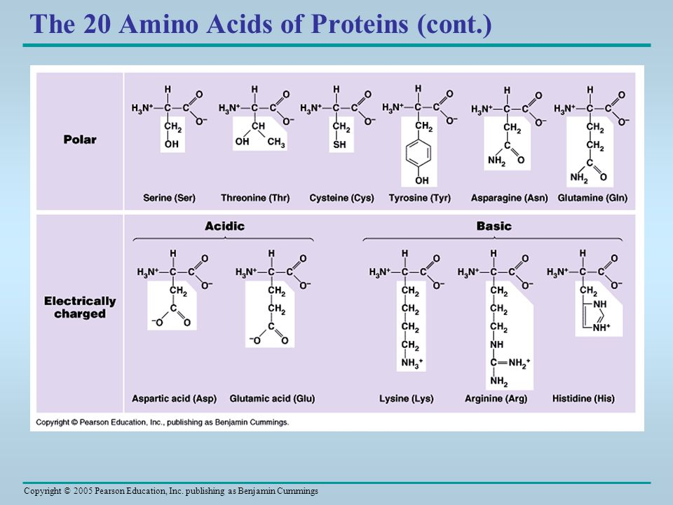 The 20 Amino Acids of Proteins (cont.)