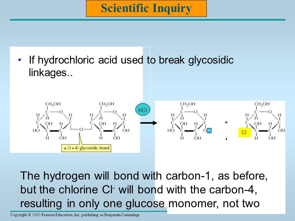 Scientific Inquiry If hydrochloric acid used to break glycosidic linkages.. HCl. Cl.
