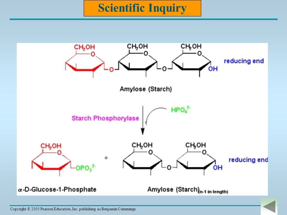 Scientific Inquiry http://www.mikeblaber.org/oldwine/BCH4053/Lecture12/Lecture12.htm
