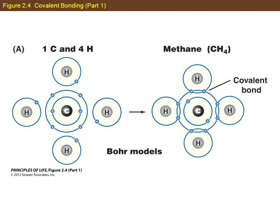 Figure 2.4 Covalent Bonding (Part 1)