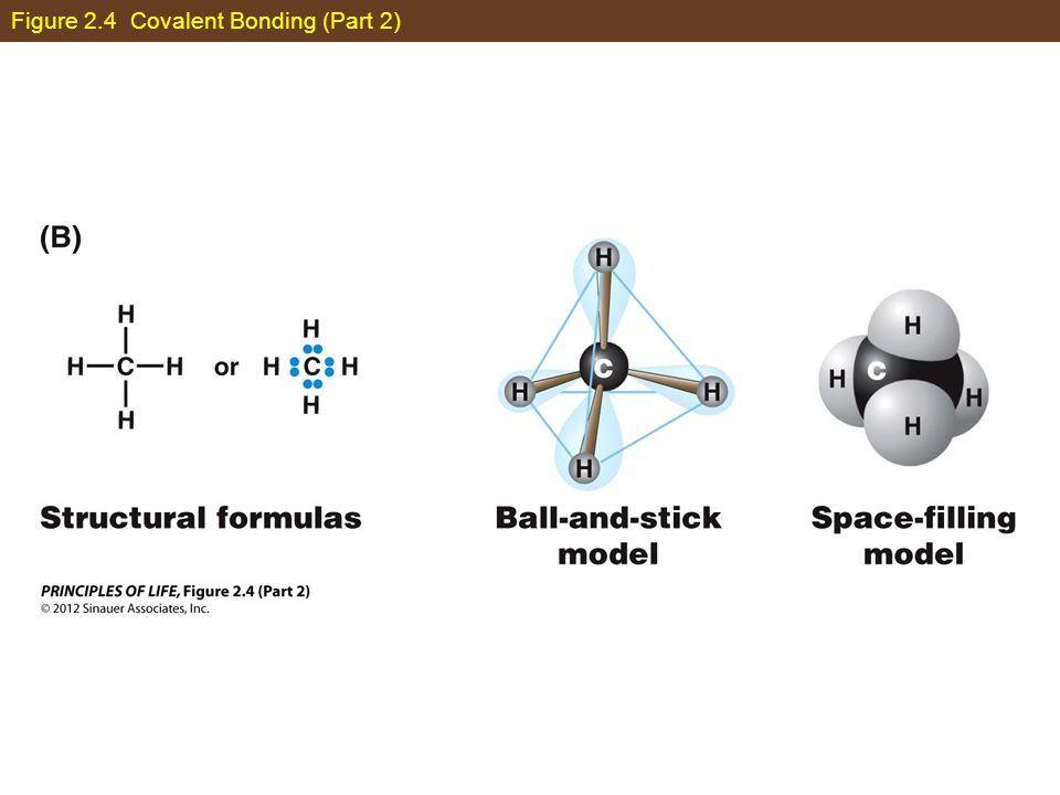 Figure 2.4 Covalent Bonding (Part 2)