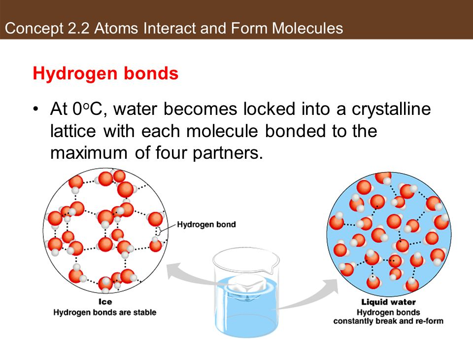 Hydrogen bonds At 0oC, water becomes locked into a crystalline lattice with each molecule bonded to the maximum of four partners.