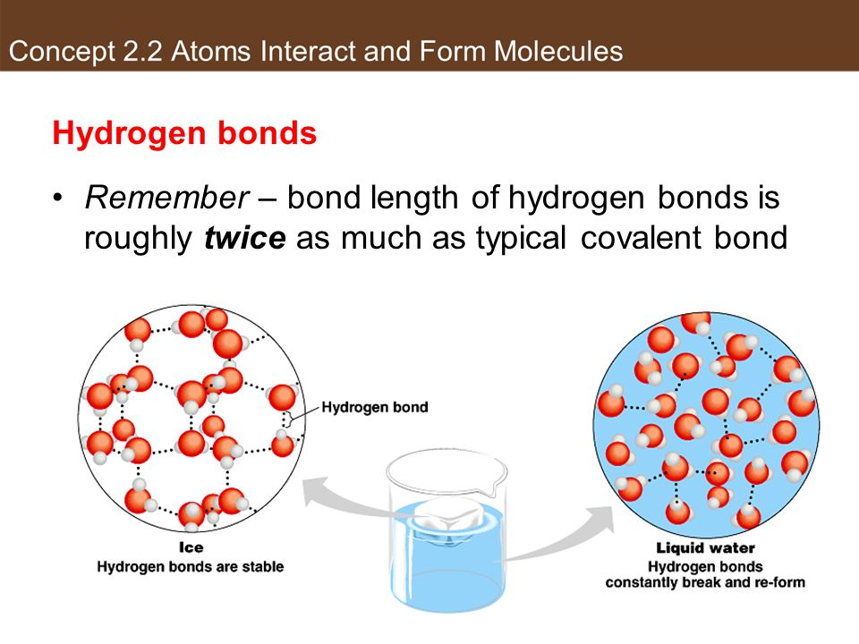 Hydrogen bonds Remember – bond length of hydrogen bonds is roughly twice as much as typical covalent bond.