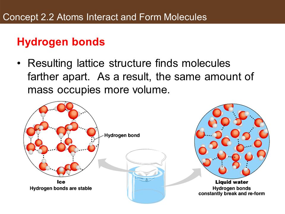 Hydrogen bonds Resulting lattice structure finds molecules farther apart.