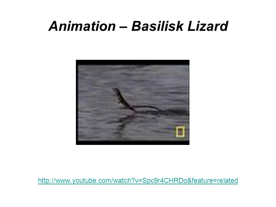 Animation – Basilisk Lizard