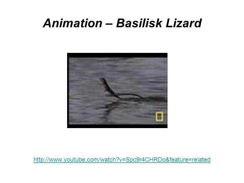 Animation – Basilisk Lizard