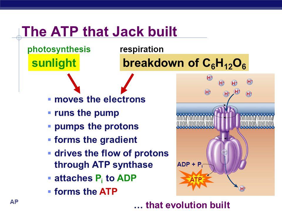 The ATP that Jack built sunlight breakdown of C6H12O6
