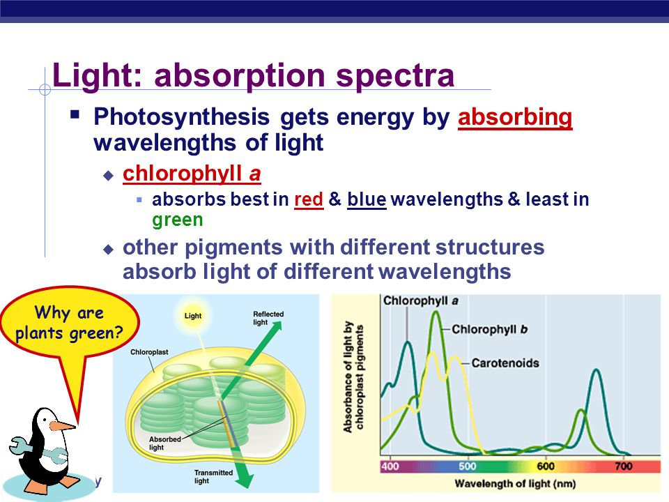 Light: absorption spectra