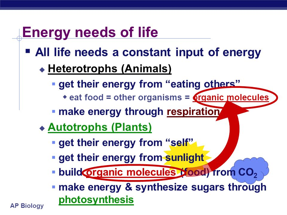 Energy needs of life All life needs a constant input of energy