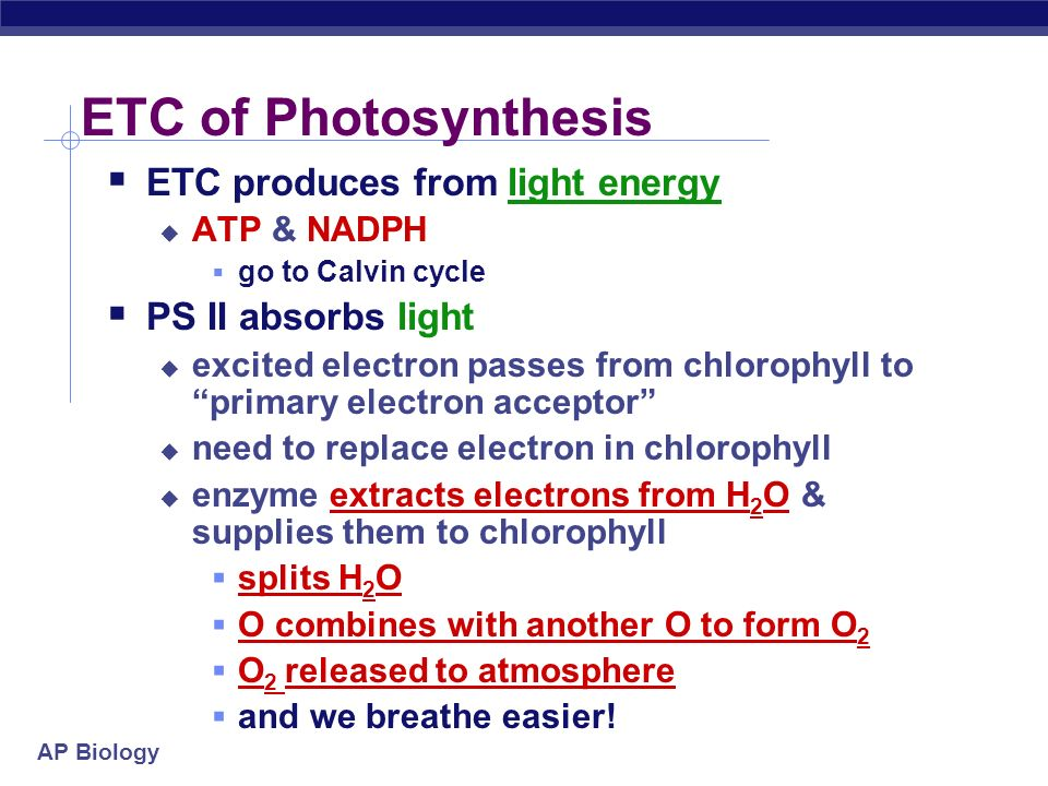 ETC of Photosynthesis ETC produces from light energy