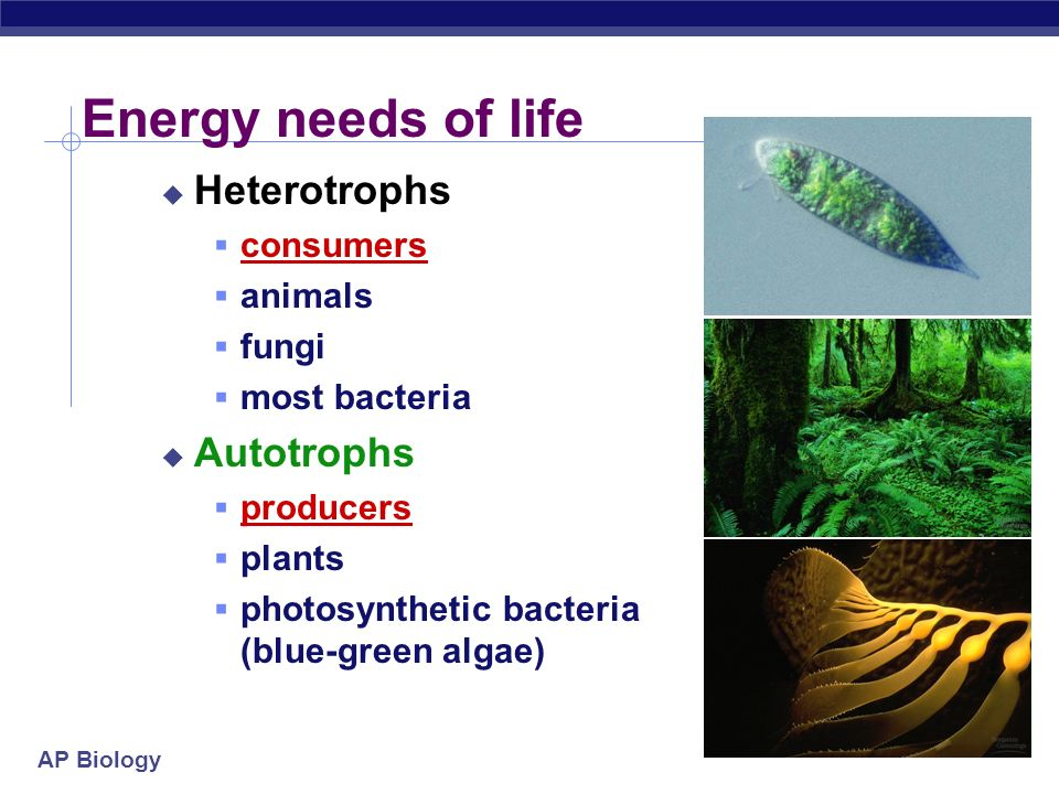 Energy needs of life Heterotrophs Autotrophs consumers animals fungi