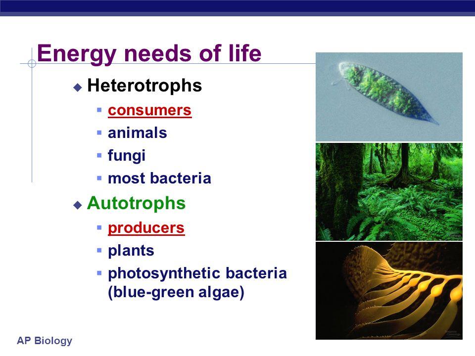 Energy needs of life Heterotrophs Autotrophs consumers animals fungi