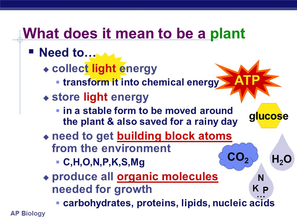 What does it mean to be a plant