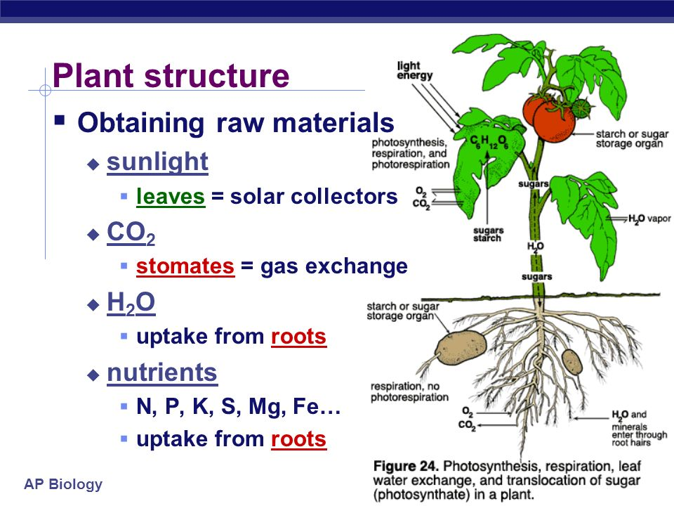 Plant structure Obtaining raw materials sunlight CO2 H2O nutrients