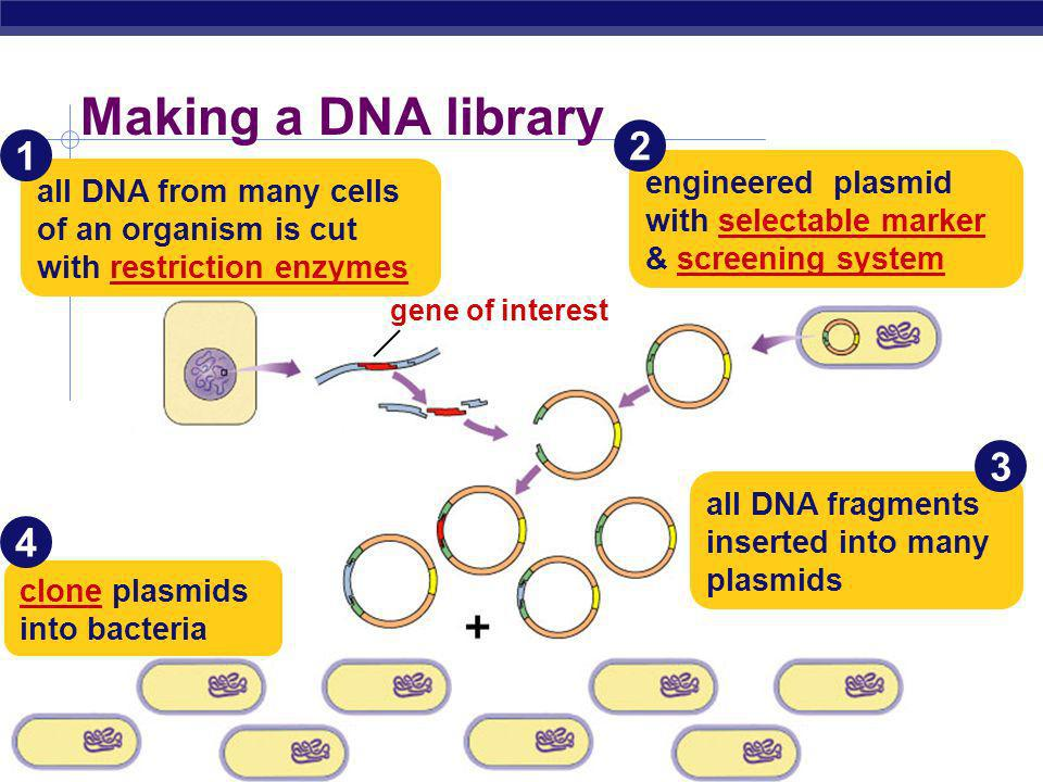 Making a DNA library 2. 1. engineered plasmid with selectable marker & screening system.