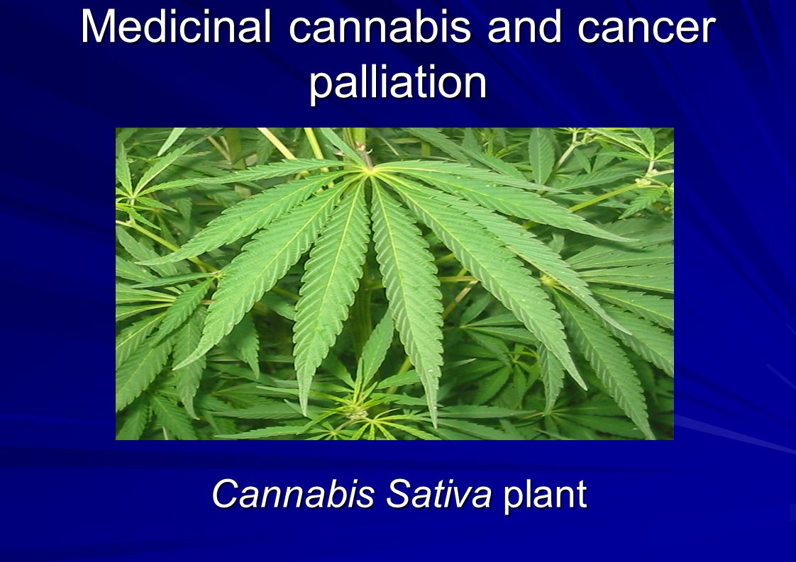 Medicinal cannabis and cancer palliation