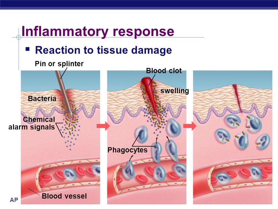 Fighting The Enemy Within Immune Lymphatic System Ppt