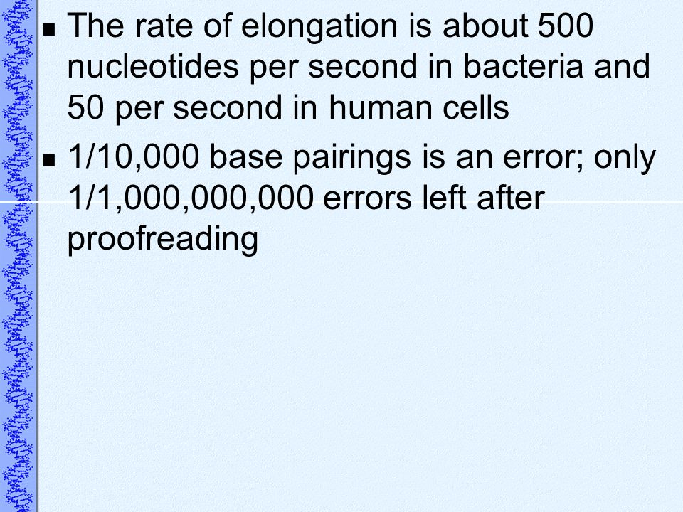 The rate of elongation is about 500 nucleotides per second in bacteria and 50 per second in human cells