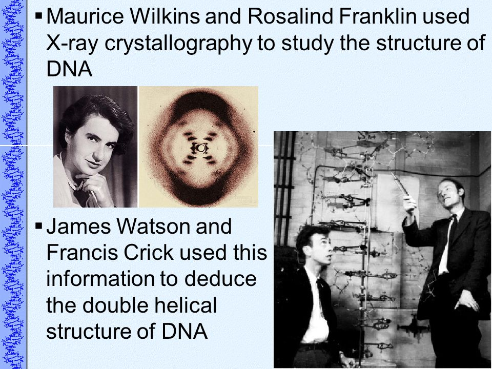 Maurice Wilkins and Rosalind Franklin used X-ray crystallography to study the structure of DNA