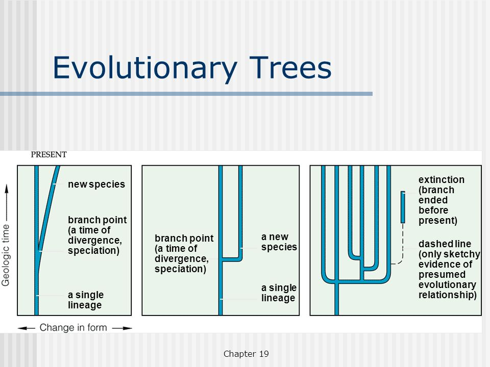 Evolutionary Trees extinction (branch ended before present)
